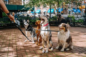 honden uitlaten als bijbaan